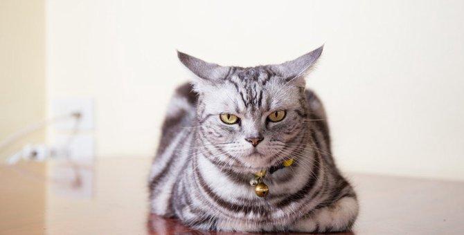 猫が構ってほしくないシーン5つ