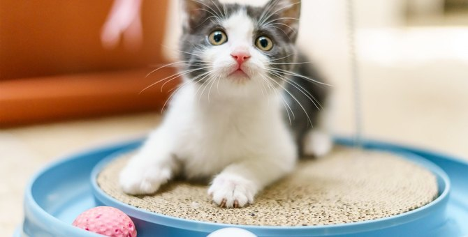 『遊んで欲しい猫』がするアピール4つ