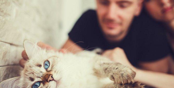 猫は自分と違う性別の人が好き?ネコに好かれる人になるには!?