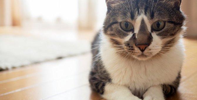 フローリングで猫を飼うのはNG!5つの理由