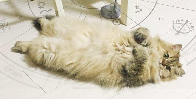 Laylaの12猫占い 9/2~9/8までのあなたと猫ちゃんの運勢