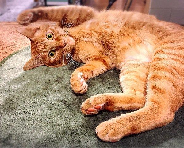 猫の『催促』サイン5つ