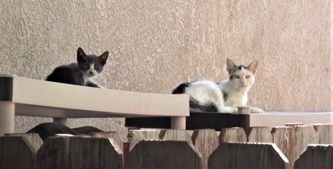 子猫と別々に保護された母猫が、わが子との再会で驚きの行動に!
