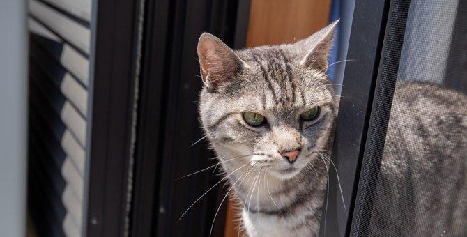 飼い主さんは要注意!『脱走』しやすい猫の特徴3つ