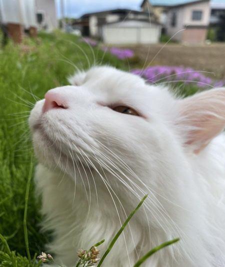 知ってた?猫の「ひげ」の役割3つ