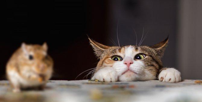 猫の不思議な習性5選とその理由とは