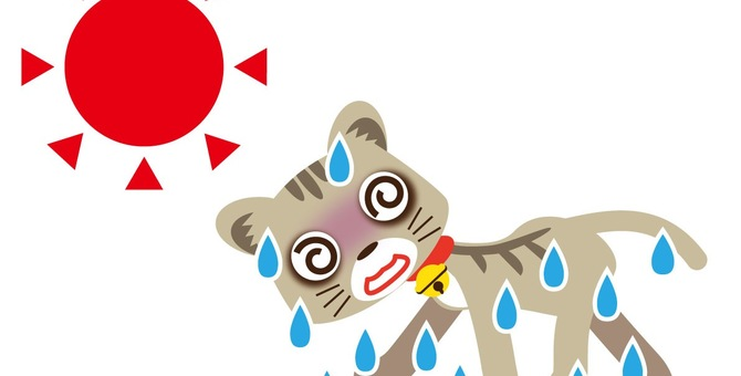 猫の熱中症の症状と応急処置について