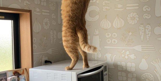 おやつ欲しいニャ!器用に扉を突破する猫さんの手馴れた犯行が話題!