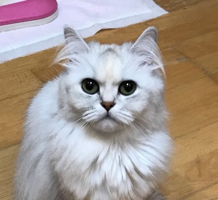 あなたの猫は大丈夫?愛猫が体験した『ストルバイト結石』治療までの道のり