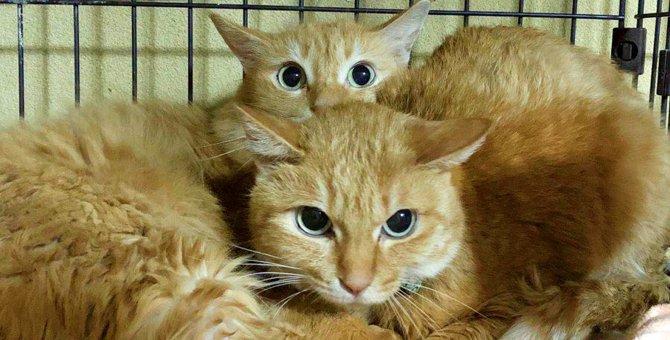 飼い主が急逝した5匹の猫…保健所から救出され幸せに