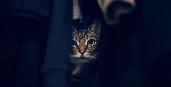 猫の心の病気を見逃さない!飼い主が知っておきたいSOSサイン5つ