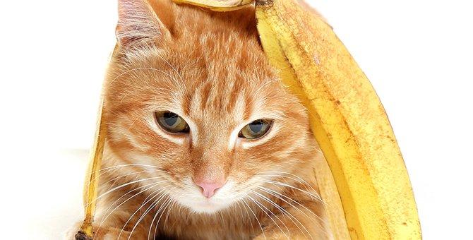 猫はバナナを食べても大丈夫?与えるときの注意点とは