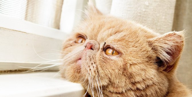 猫がため息を吐くのはどうして?5つの気持ち