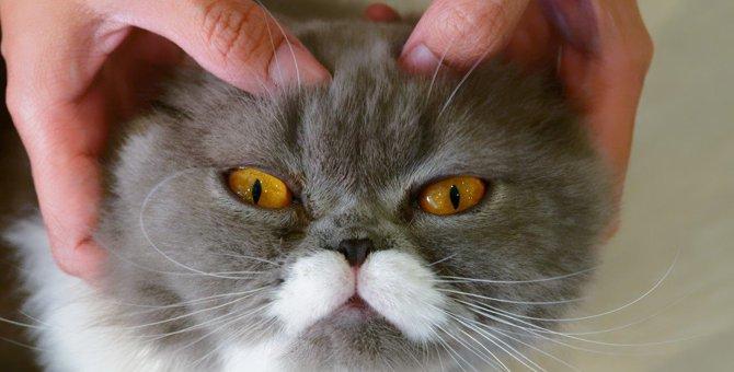 猫も肩こりになる?コリやすい体の場所と癒す方法