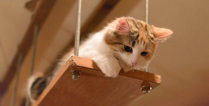 愛猫に合わないキャットタワーを使っていると起きるかもしれない事故5つ
