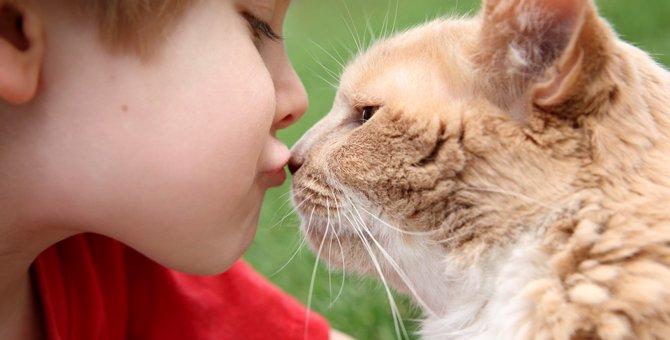 猫が鼻チューをする理由と鼻の役割について