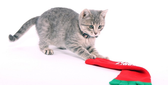 猫が好きな変な物7選!