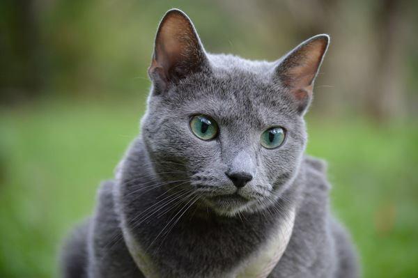 愛猫をスターにする方法3つ