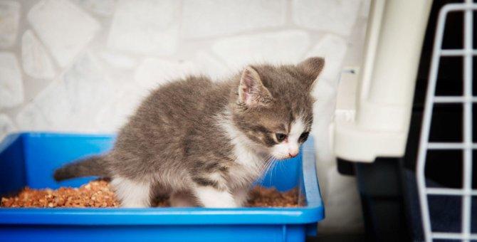 猫のウンチが『異常に臭い』原因3選!ニオイを消すための対策から考えられる病気まで