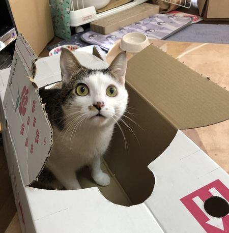 実は買う必要がない『猫用グッズ』3つ
