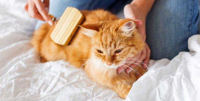 猫のお手入れはどこをすればいい?方法やチェック点をご紹介!