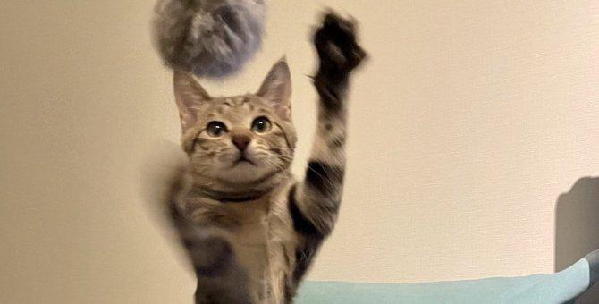 『クールな猫』にかまってもらうコツ3つ