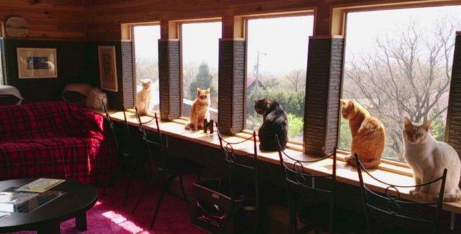 三重の猫カフェ5選!ログハウスの中で触れ合えるお店も