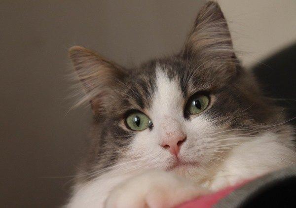 猫にNGな『キャットタワー』の特徴3選