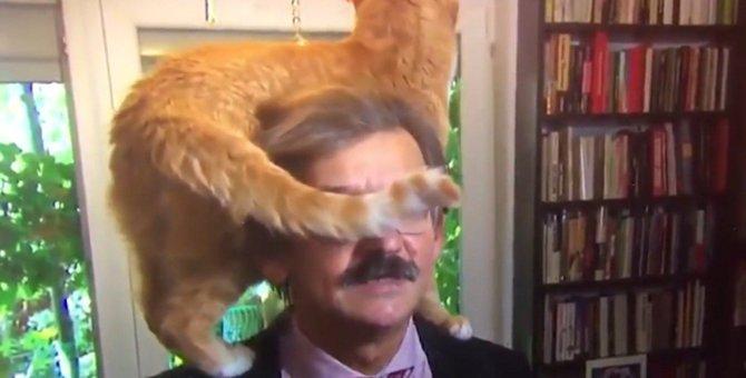 「動じない」猫好き教授の優しさを感じる動画