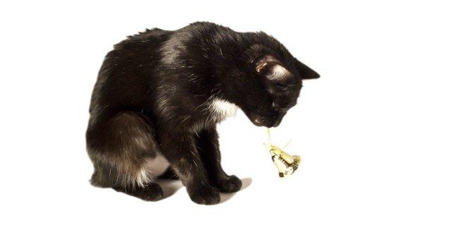 猫がベルを鳴らしてエサを注文する可愛い動画!