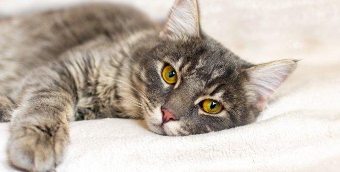 猫がのどを鳴らすのは体調不良のサインかも?考えられる3つの理由
