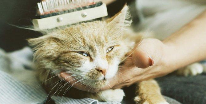 猫の毛球症の症状と対策について