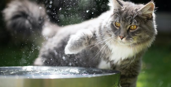 猫は体を濡らされるとどれぐらいのストレスを感じる?