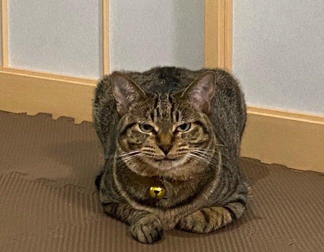 新幹線にそっくりと話題の猫さんは、家猫の幸せ満喫中!