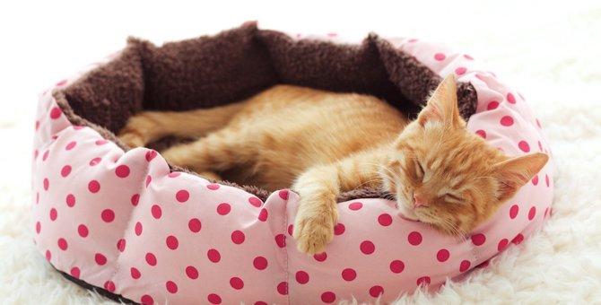 簡単!猫ちゃん用ベッドの作り方