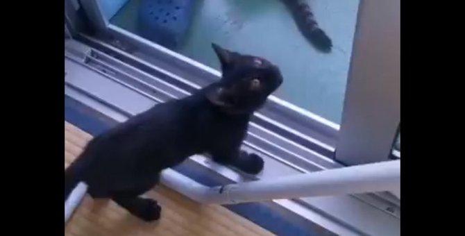 猿!?いや、スパイダー!?網戸を上るのが得意な黒猫さんが人気沸騰中!