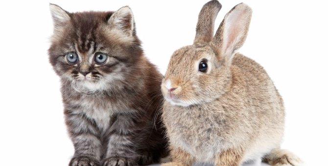猫とうさぎを一緒に飼うためのコツや注意点