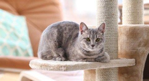 猫との生活を始める前に知っておきたい事3つ