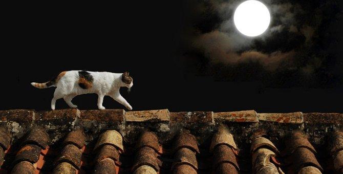 猫の夢占い 16のパターンとそれぞれの意味とは