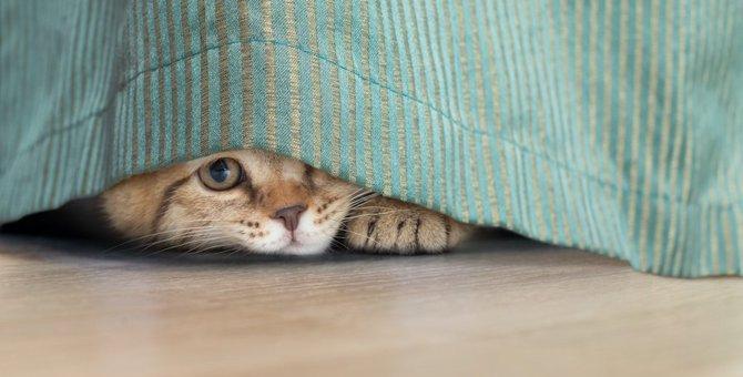 猫も「うつ病」になる?うつ状態の猫が示す兆候と対処法について