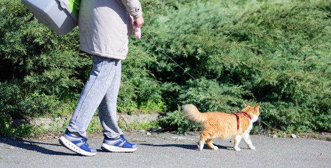 猫がハーネスを嫌がる際の上手な付け方と注意点