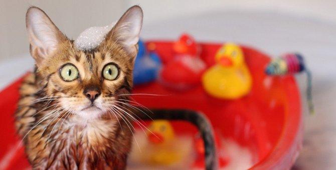 どこから洗うと大人しくなる?猫を洗うコツ
