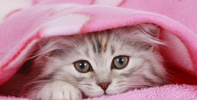 猫は何色が見えるの?好きな色3選