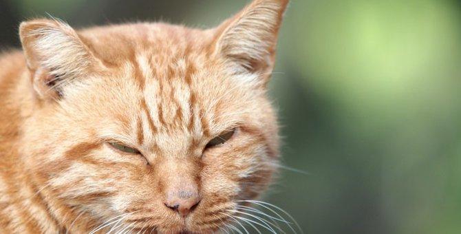 猫が家出をする理由やその時の対処法