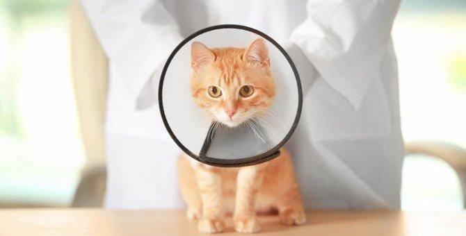 猫がエリザベスカラーを嫌がる時の対処法と注意点