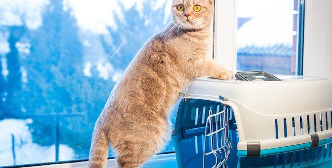 猫と帰省する時の移動手段や注意すべき点