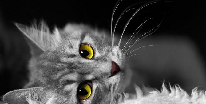 猫が飼い主を無視するときの本当の気持ち5つ