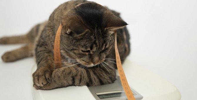 猫の『メタボリックス度』がわかるチェック項目3つ!健康寿命を守る肥満対策とは?
