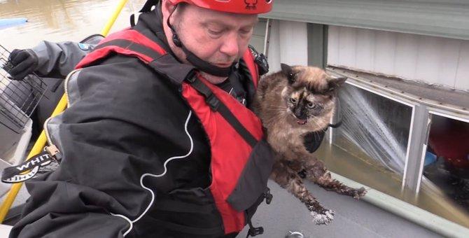浸水した家に残された猫…その命を助けた意外なモノとは?