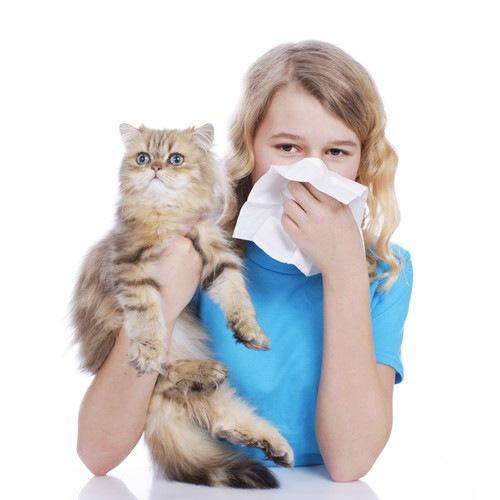 猫アレルギーの皮膚に出る3つの症状と対処法